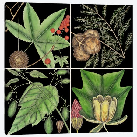Botanical Grid III Canvas Print #CAT189} by Mark Catesby Canvas Artwork