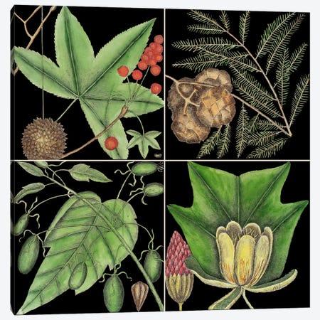 Botanical Grid III Canvas Print #CAT189} by Mark Catesby Canvas Artwork