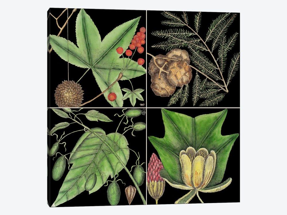 Botanical Grid III by Mark Catesby 1-piece Canvas Art Print