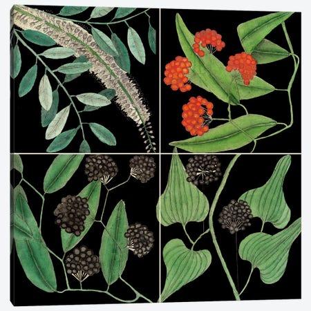 Botanical Grid IV Canvas Print #CAT190} by Mark Catesby Canvas Art Print