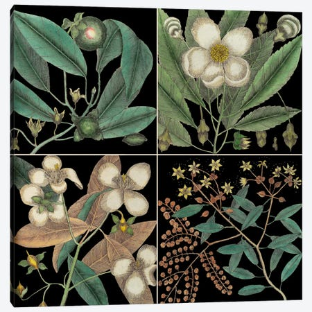 Botanical Grid V Canvas Print #CAT191} by Mark Catesby Canvas Art Print