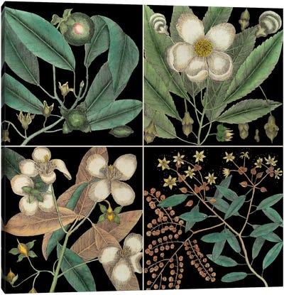 Botanical Grid V Canvas Art Print