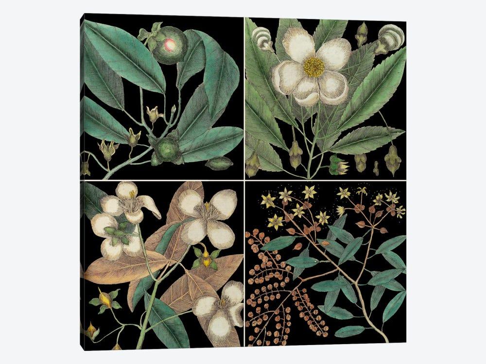 Botanical Grid V by Mark Catesby 1-piece Canvas Art