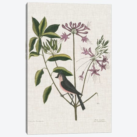 Studies In Nature I Canvas Print #CAT192} by Mark Catesby Canvas Print