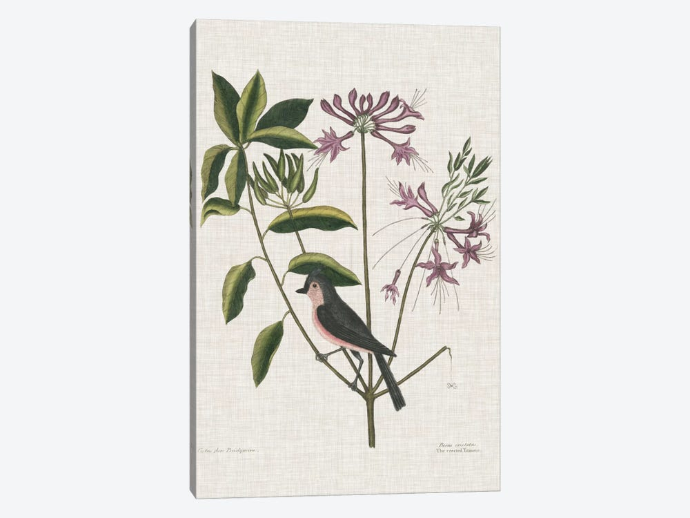 Studies In Nature I by Mark Catesby 1-piece Canvas Print