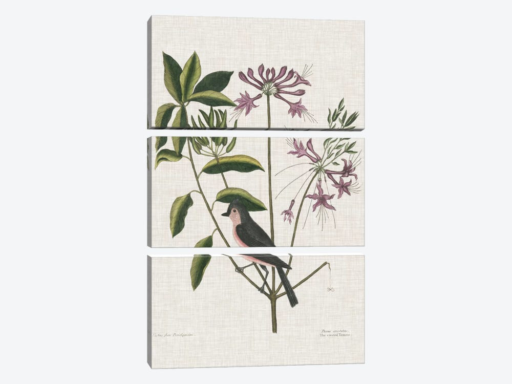 Studies In Nature I by Mark Catesby 3-piece Canvas Art Print