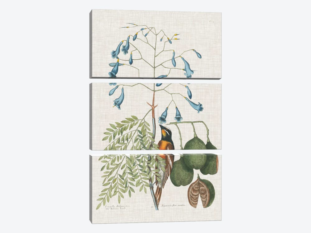 Studies In Nature II by Mark Catesby 3-piece Canvas Artwork