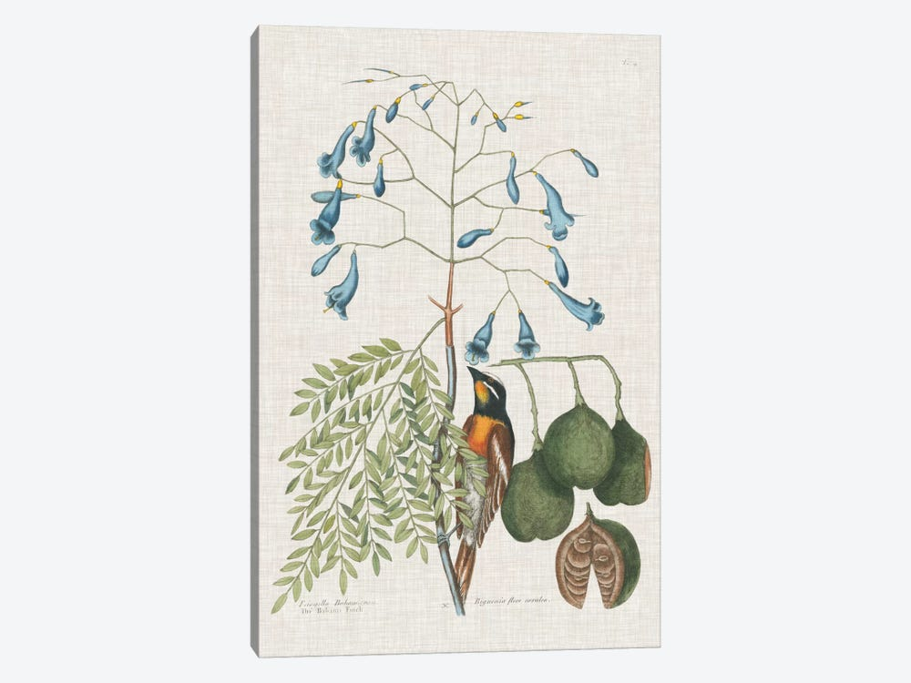 Studies In Nature II by Mark Catesby 1-piece Canvas Artwork