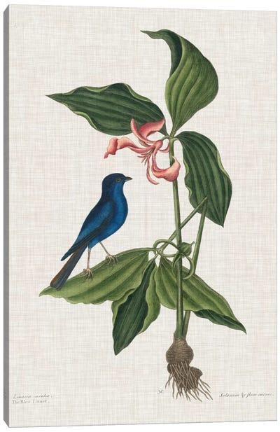 Studies In Nature III Canvas Art Print