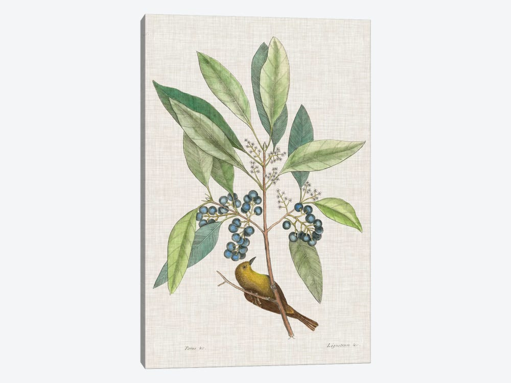 Studies In Nature IV by Mark Catesby 1-piece Canvas Wall Art