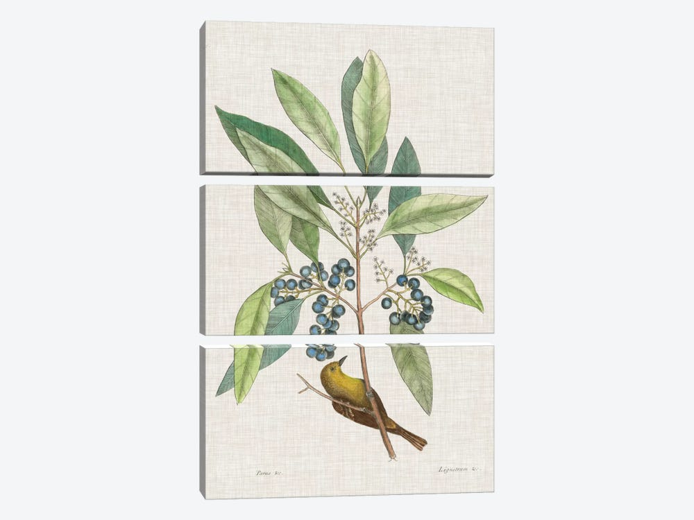 Studies In Nature IV by Mark Catesby 3-piece Canvas Art