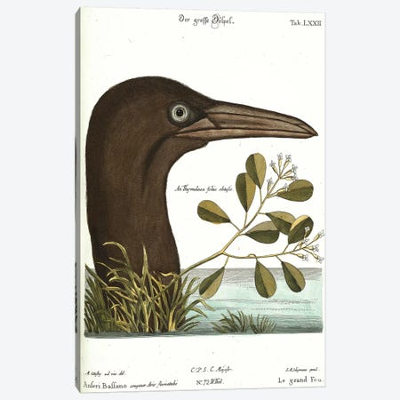 Booby Bird Canvas Print #CAT197} by Mark Catesby Canvas Artwork