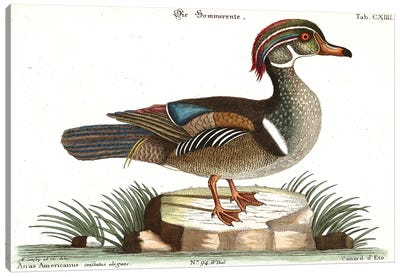 Duck Canvas Art Print