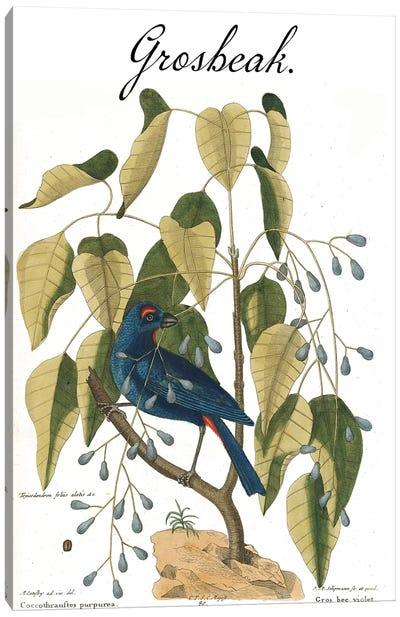 Grosbeak Canvas Art Print