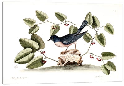 Blue Brid & Smilax Canvas Art Print