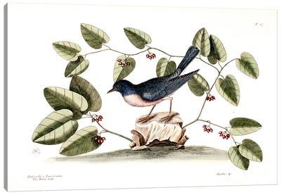 Blue Brid & Smilax Canvas Art Print