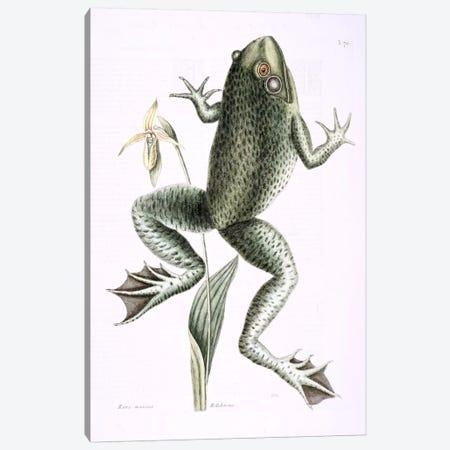 Bull Frog & Lady's Slipper Of Pennsylvania Canvas Print #CAT35} by Mark Catesby Canvas Art