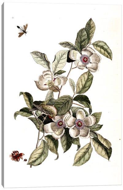 Goldcrest, Ichneumon Wasp & Silky Camellia Canvas Art Print