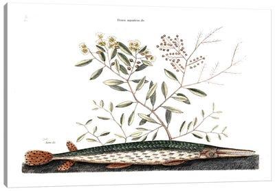 Green Gar Fish & Frutex Aquaticus Canvas Art Print