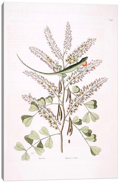 Catesby's Natural History Series: Green Lizard Of Jamaica & Logwood Canvas Print #CAT73