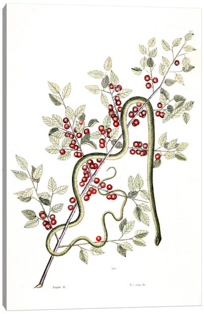 Green Snake & Inkberry Canvas Art Print