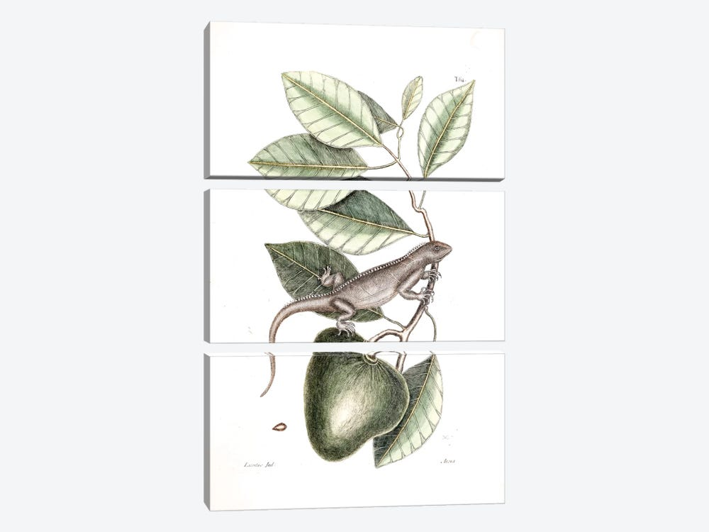 Guana & Alligator Apple by Mark Catesby 3-piece Canvas Wall Art