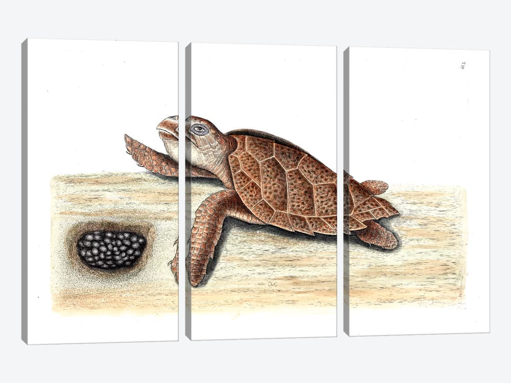 Hawks-Bill Turtle by Mark Catesby 3-piece Canvas Art Print