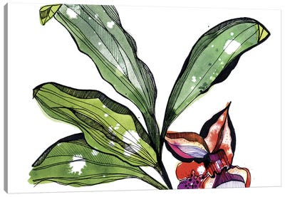 Bee Orchid Canvas Print #CBA23