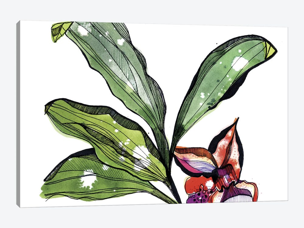 Bee Orchid by Cayena Blanca 1-piece Canvas Print