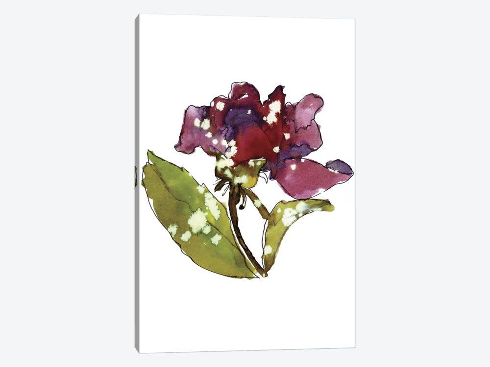 Marsala Rose by Cayena Blanca 1-piece Canvas Art