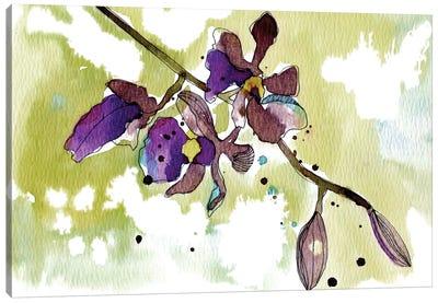 Purple Orchids Canvas Print #CBA9