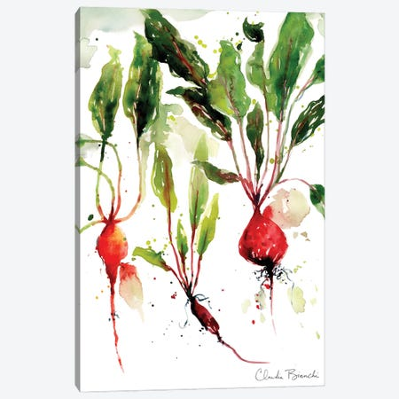 Garden Beets Canvas Print #CBI103} by Claudia Bianchi Canvas Artwork
