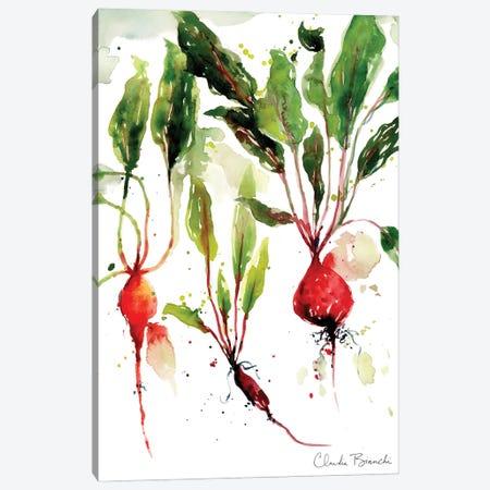 Garden Beets Canvas Print #CBI103} by Claudia Bianchi Canvas Artwork