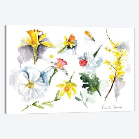 Daffodils Canvas Print #CBI111} by Claudia Bianchi Canvas Art Print