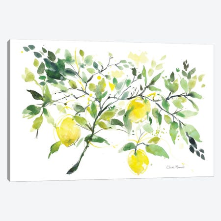 Lemon Branch Canvas Print #CBI37} by Claudia Bianchi Art Print