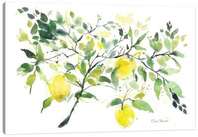 Lemon Branch Canvas Art Print