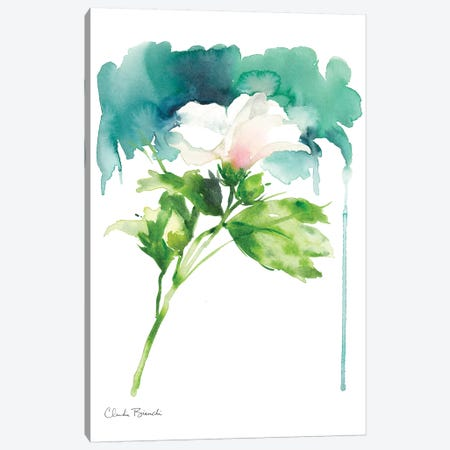 Single Rose Of Sharron Canvas Print #CBI65} by Claudia Bianchi Canvas Wall Art