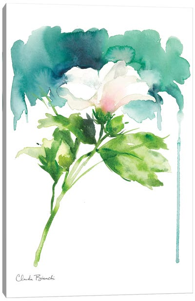 Single Rose Of Sharron Canvas Art Print
