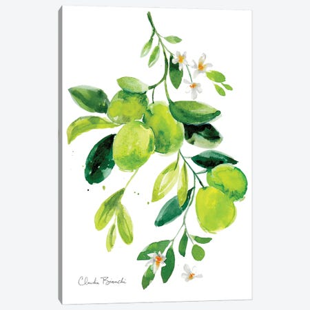 Limes Canvas Print #CBI90} by Claudia Bianchi Canvas Wall Art
