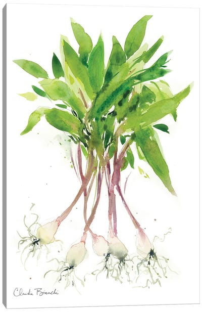 Ramps Canvas Art Print