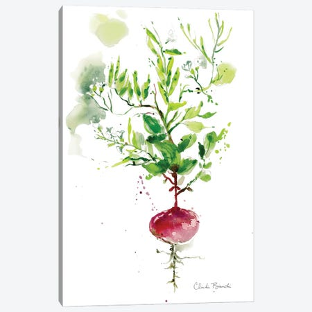Singel Radish Canvas Print #CBI96} by Claudia Bianchi Canvas Art Print