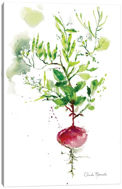 Singel Radish Canvas Art Print
