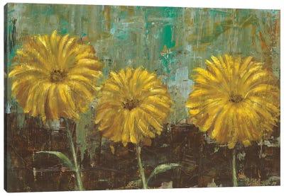 Morning Gold II Canvas Art Print