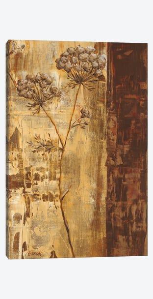 Sundew II Canvas Print #CBL16} by Carol Black Canvas Art