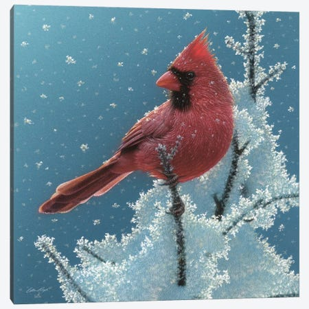 Cardinal - Cherry on Top Canvas Print #CBO100} by Collin Bogle Canvas Artwork