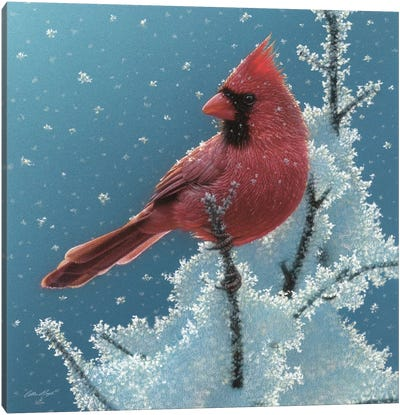 Cardinal - Cherry on Top Canvas Art Print