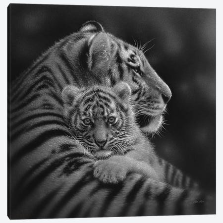 Cherished Tiger Cub In Black & White Canvas Print #CBO102} by Collin Bogle Canvas Art