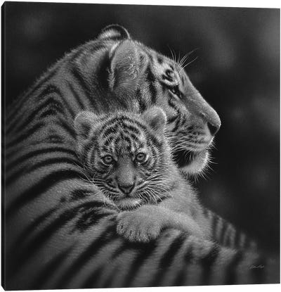 Cherished Tiger Cub In Black & White Canvas Art Print