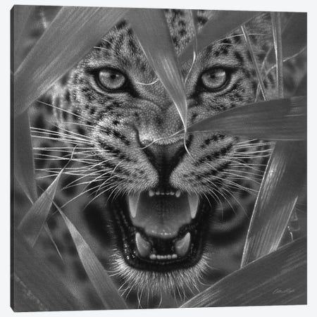 Jaguar Ambush In Black & White Canvas Print #CBO103} by Collin Bogle Canvas Artwork