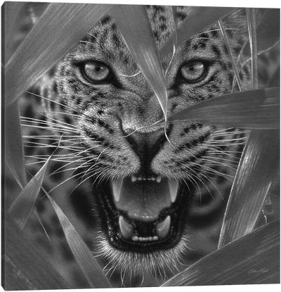Jaguar Ambush In Black & White Canvas Art Print